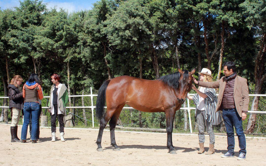 23 de junio Taller de desarrollo personal con caballos