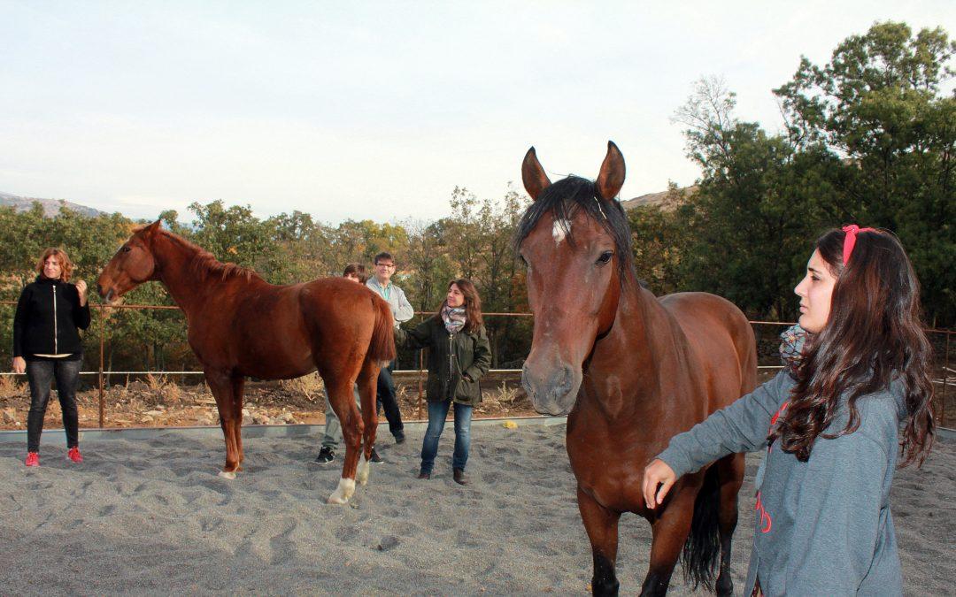 6  de octubre  – Siente, aprende y  disfruta junto a los caballos