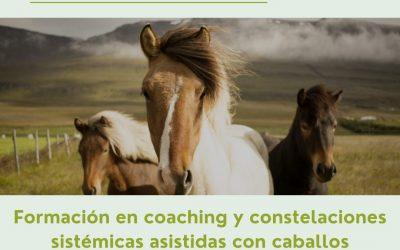 Doble formación coaching y constelaciones sistémicas asistidas con caballos (2 a 8 Agosto 2.021)